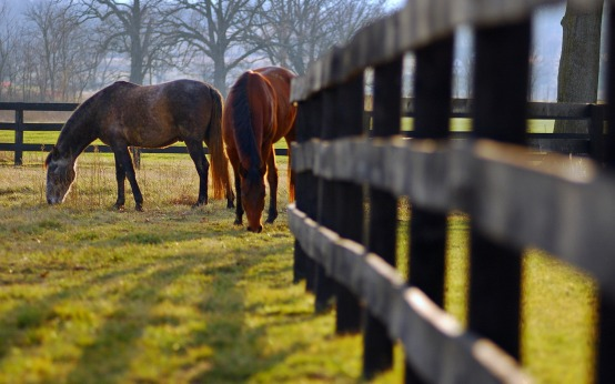 animals_widewallpaper_horses-grazing_71714.jpg